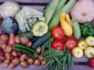 1059133_august_vegetables__3